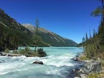 Härlig bergflod som flödar in i sjön Blå Kucherla flod i den Belukha nationalparken, Altai berg, Sibirien, Ryssland royaltyfri foto