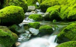 Härlig bild av den naturliga applådera vattenfallet Fotografering för Bildbyråer