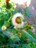 Härlig bild av den vita blomman arkivfoto
