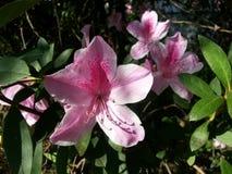 Härlig bild av härliga blommor royaltyfria bilder