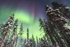 Härlig bild av massiva mångfärgade gröna vibrerande Aurora Borealis, nordliga ljus Royaltyfri Fotografi