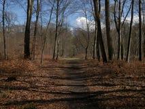Härlig bild av skogen Arkivbild