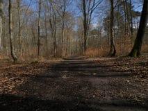 Härlig bild av skogen Arkivbilder