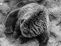 Härlig björn Arkivbild