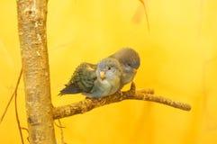 Härlig blå fågel arkivfoton