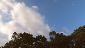 Härlig blå himmel på solnedgången som är hög i himmel som flyger moln som tänds av solen högt ovanför träden sväva härliga moln T lager videofilmer