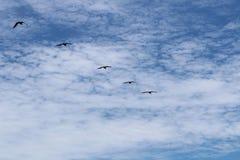 härlig blå sky Royaltyfria Foton
