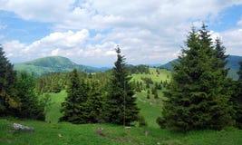Härlig blandning av ängar och skogen på Velkaen Fatra Mts Arkivbild