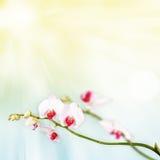 Härlig blom- abstrakt bakgrund, isolerade orkidér Arkivbilder