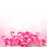 Härlig blom- abstrakt bakgrund, isolerade orkidér Royaltyfria Foton