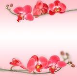 Härlig blom- abstrakt bakgrund, isolerade orkidér Royaltyfria Bilder