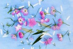 Härlig blom- bakgrund med rosa rosor och hortensia på blå bakgrund Royaltyfria Foton