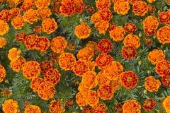 Härlig blom- bakgrunds… bakgrund med färgrika blommor Royaltyfri Fotografi