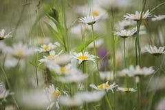 Härlig blom- bakgrunds… bakgrund med färgrika blommor Arkivbild