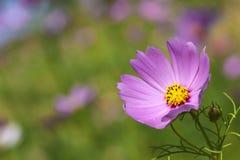 Härlig blom- Border.Flower-design Arkivfoto