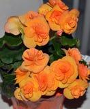 Härlig blom- ordning, av härliga orange blommor royaltyfria foton