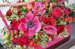 Härlig blom- ordning av röda, rosa och burgundy blommor i en rosa träask royaltyfria bilder