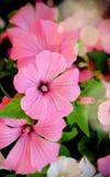 Härlig blom- vertikal bakgrund Royaltyfria Bilder