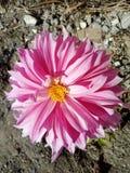 härlig blomma arkivbilder