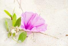 härlig blomma arkivfoton