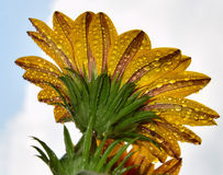 härlig blomma Arkivbild