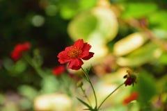 härlig blomma Fotografering för Bildbyråer