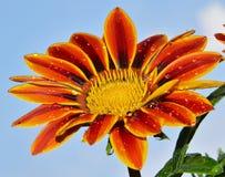 härlig blomma Royaltyfri Fotografi