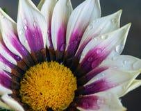 härlig blomma Arkivfoto