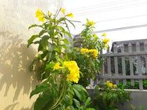 härlig blomma Royaltyfria Foton
