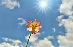 härlig blomma Royaltyfri Bild