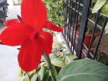 Härlig blomma av röd färg fotografering för bildbyråer