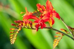 härlig blomma bara Arkivbilder