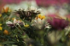 Härlig blomma, grön sidasuddighetsbakgrund fotografering för bildbyråer