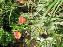 Härlig blomma i en kruka royaltyfria bilder