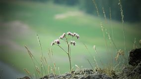 Härlig blomma i makro royaltyfria bilder