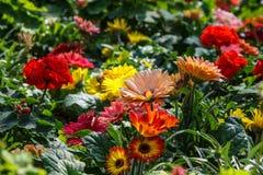 Härlig blomma i morgonen Arkivfoto