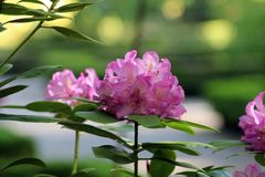 Härlig blomma i parkera Arkivbild