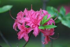 Härlig blomma i parkera Fotografering för Bildbyråer