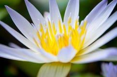 Härlig blomma i skola Royaltyfria Bilder