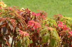 Härlig blomma i trädgården Royaltyfri Foto