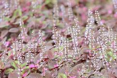 Härlig blomma i trädgården Royaltyfria Bilder
