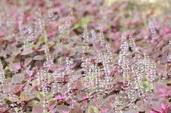 Härlig blomma i trädgården Royaltyfri Fotografi