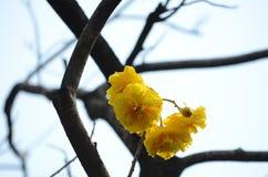 Härlig blomma i trädgården Arkivbilder