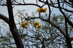 Härlig blomma i trädgården Arkivbild