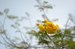 Härlig blomma i trädgården Royaltyfria Foton