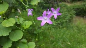 Härlig blomma i trädgården Arkivfoton