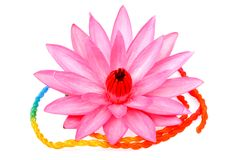 Härlig blomma lotusblomma på vit Arkivfoto