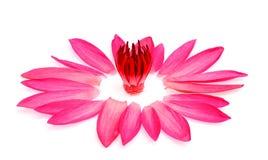 Härlig blomma lotusblomma på vit Arkivfoton