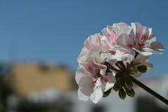 Härlig blomma med blå himmel på bakgrund Arkivbilder