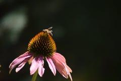 Härlig blomma med en fluga Royaltyfri Foto